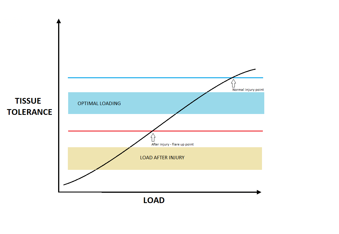 Graph explaining tissue loading zones before and after injury